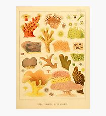 Antique Naturalist Coral  Photographic Print