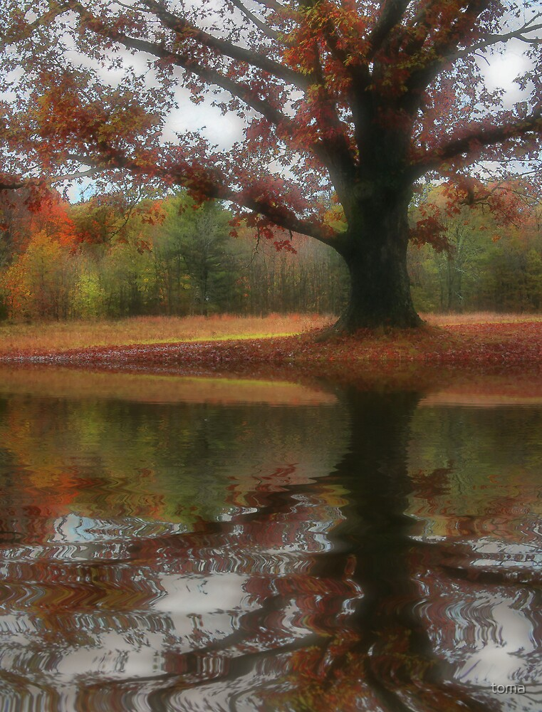 fall flood by toma