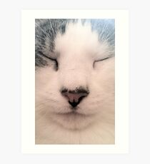Meditating Cat Art Print