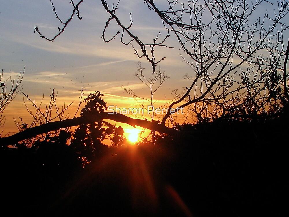Sunset 12 - 11 - 07 by Sharon Perrett