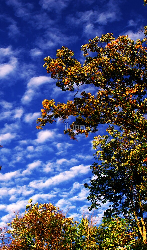 Autumn Sky by jlynn