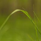 Blade of grass by pturner