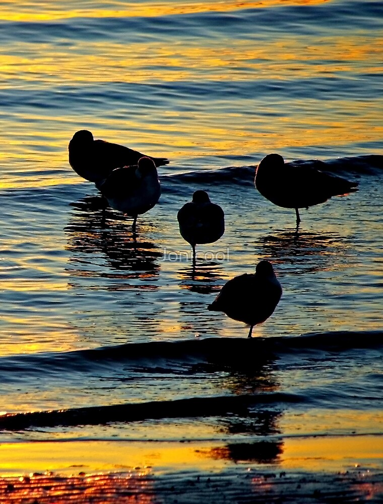 Silhouetted Gulls by Jonicool