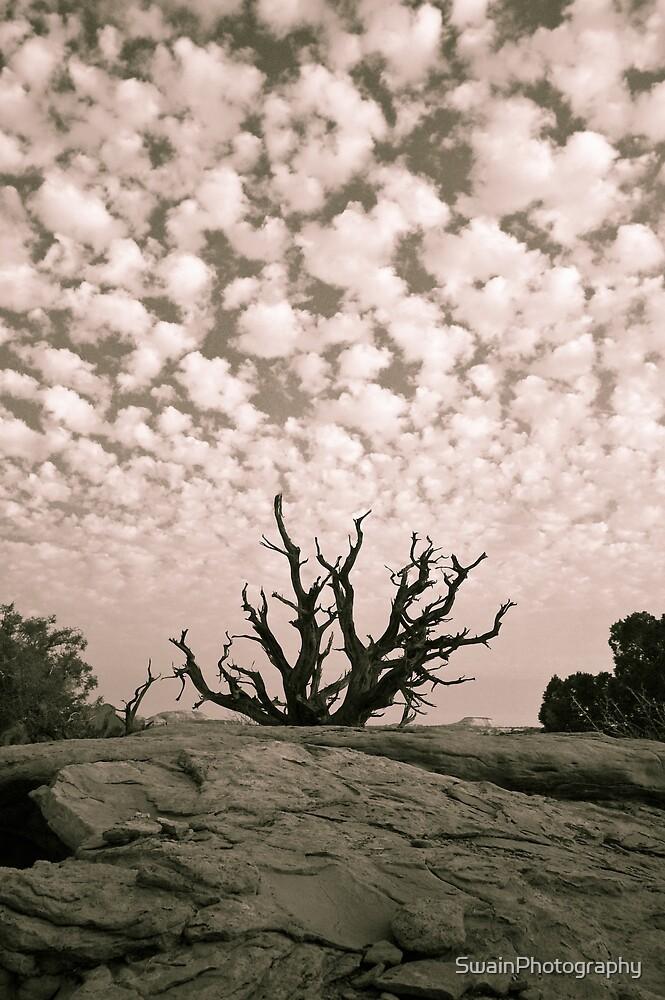 Dead Tree 1 B+W by SwainPhotography