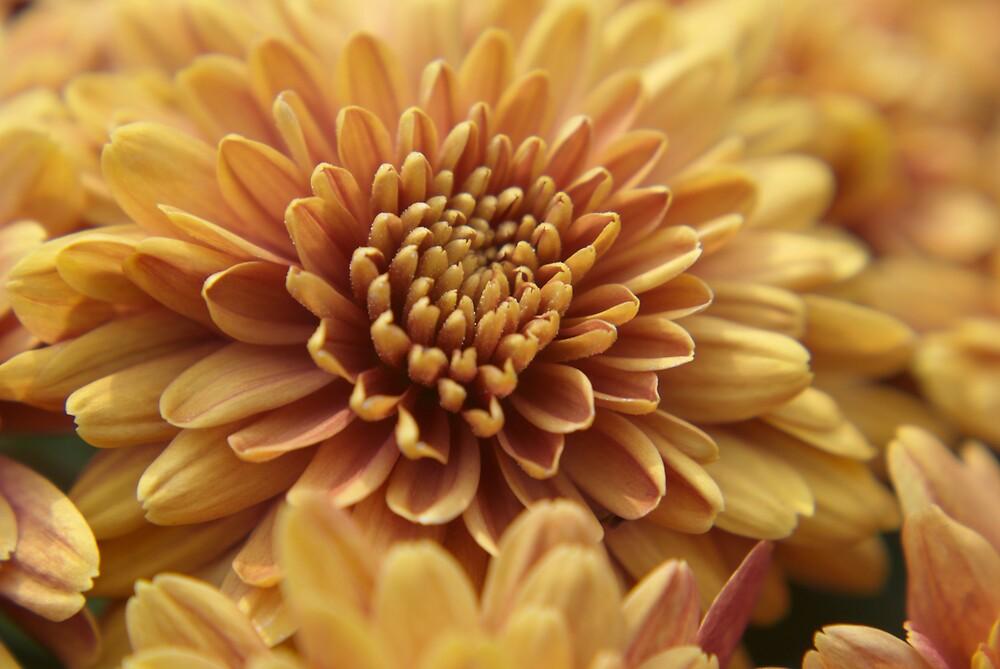 Full Bloom by Rod  Adams