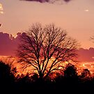 Sunset Tree by Julie Conway