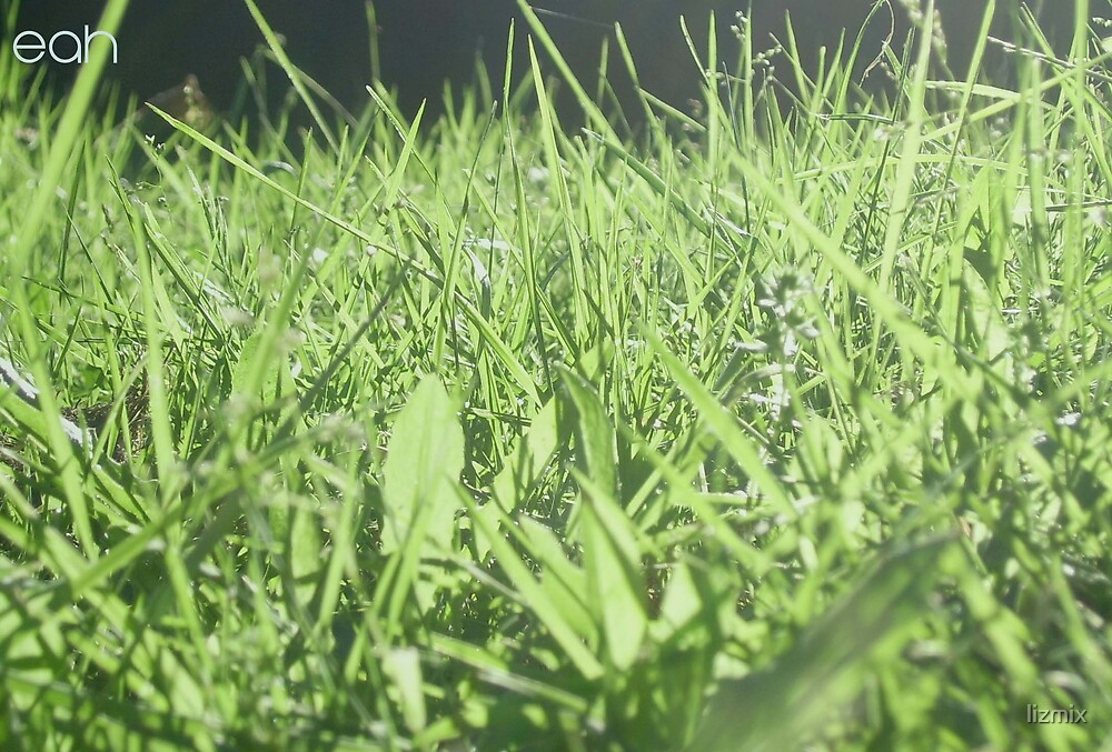 green grass by lizmix