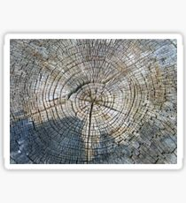 Old tree cross section - years go by Sticker