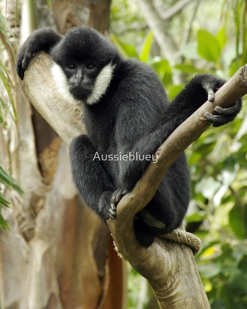 Male White Cheek Gibbon. by Aussiebluey
