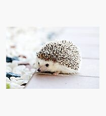 Cute Baby Hedgehog Photograph Photographic Print