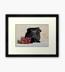 Adorable Guinea Pig With Flowers Framed Print