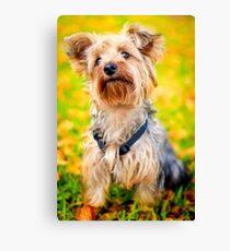 Cute Little Yorkie Yorkshire Terrier Dog Canvas Print