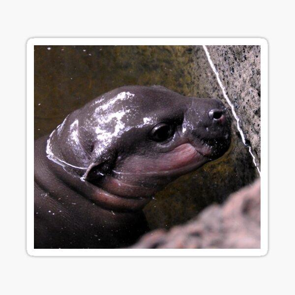 Baby Hippo Sticker
