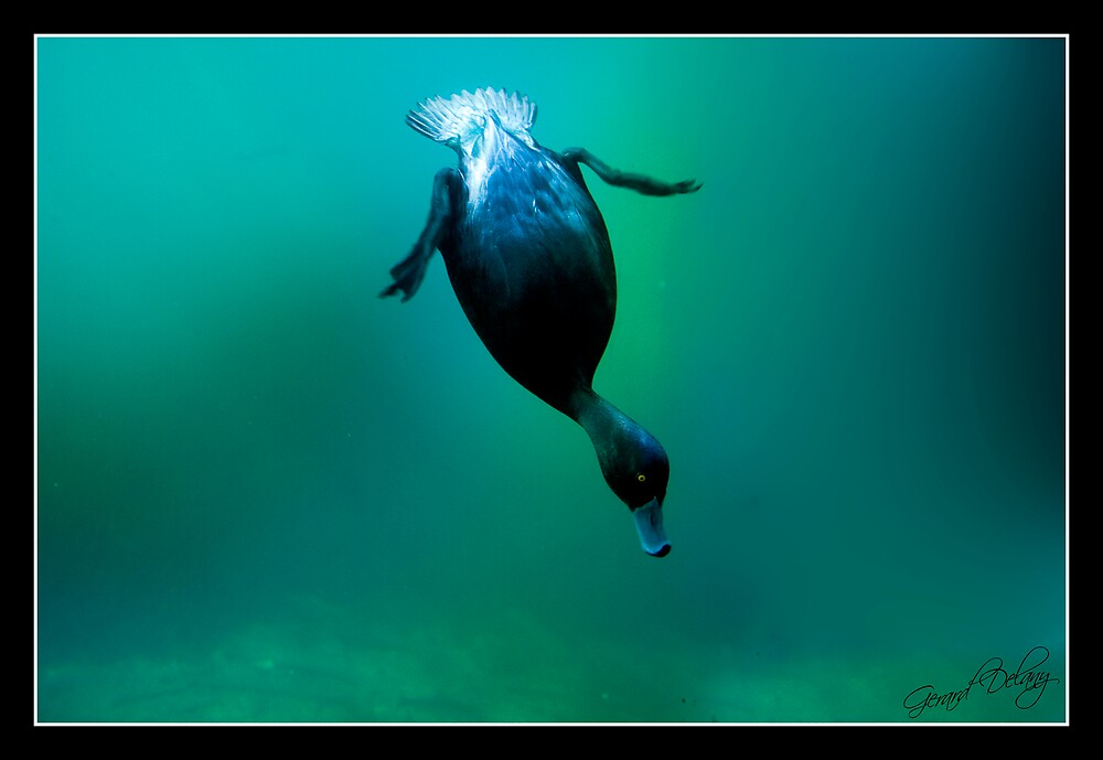 Deep Diving by Gerard Delany