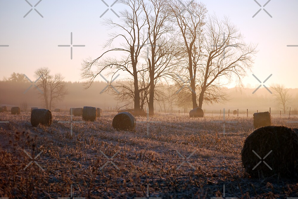 Rural America by Maria Dryfhout