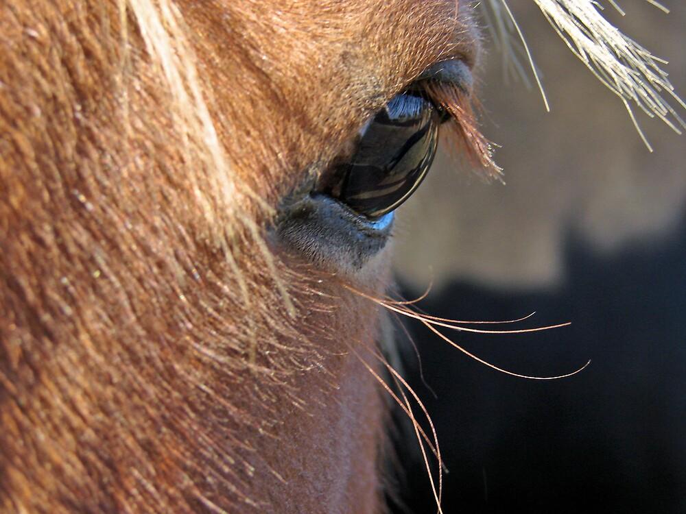 Scotch Extreme Closeup by angelandspot