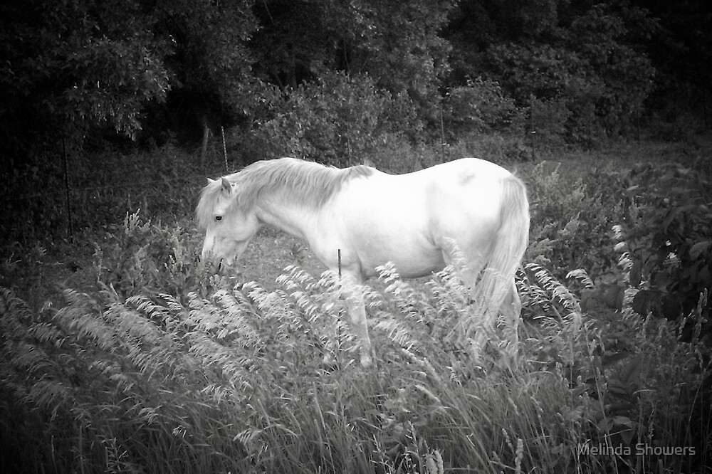 Beauty in Black & White by Melinda Showers