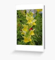 The Snapdragons Are Coming Into Bloom! Greeting Card