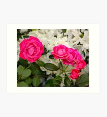 The Faries in My Garden Wanted Roses Art Print