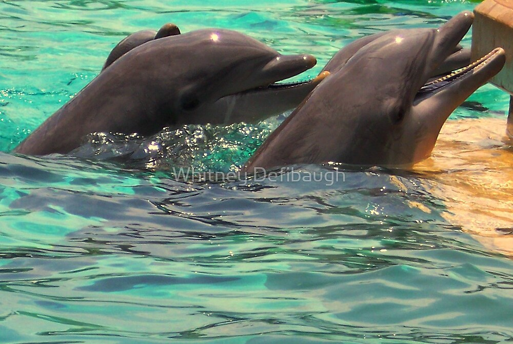 Dolphin Day by Whitney Defibaugh