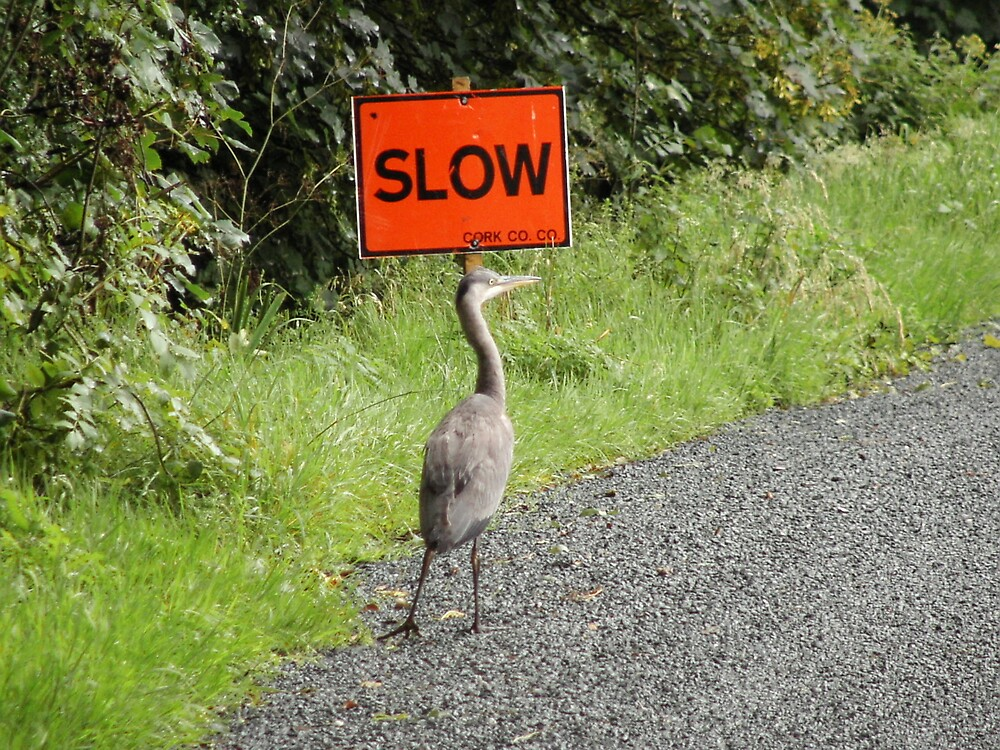 Bird heeding sign. by Irishview