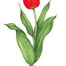 Red Tulip by Sue Abonyi