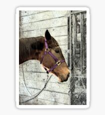 Even Horses Have Bad Hair Days Sticker