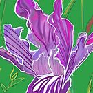 Wild Iris by penneyknightly