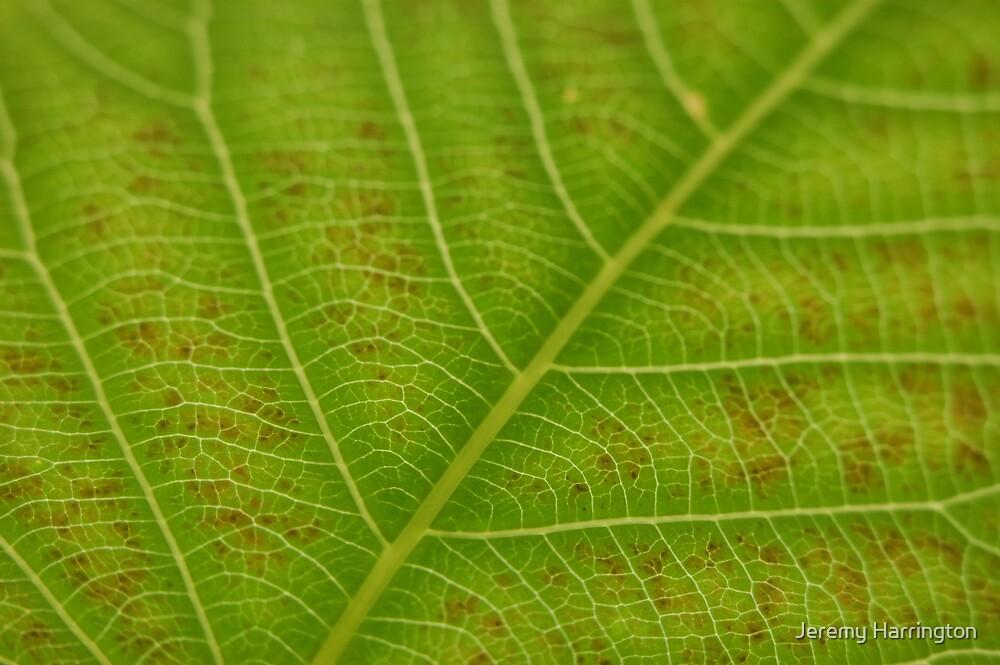 Leaf Patterns by Jeremy Harrington