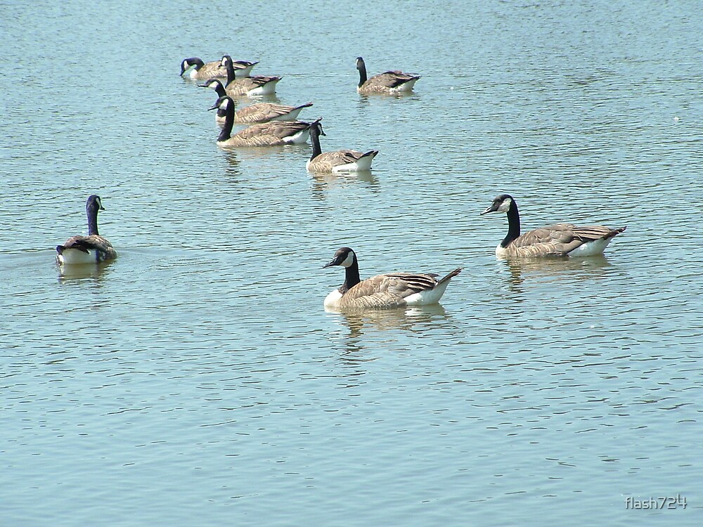 Geese by flash724