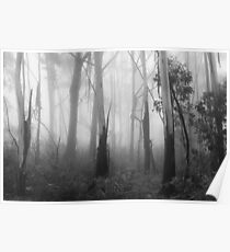 Mountain Ash Trees in Mist 1 Poster