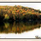 fall leaves 2 by TABI22
