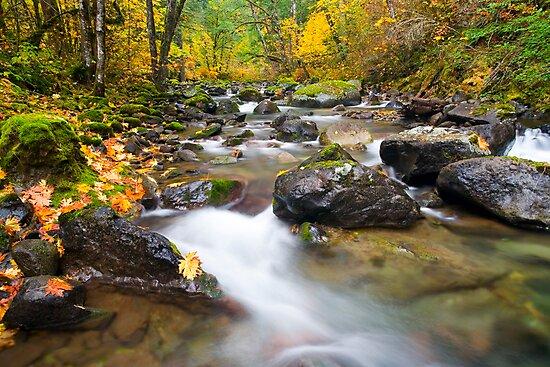 Seasons Passage by DawsonImages