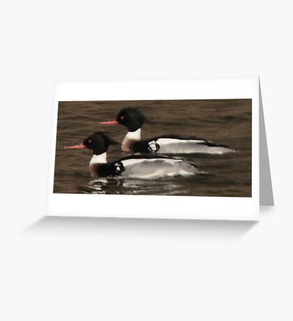 Red-Breasted Merganser's Greeting Card