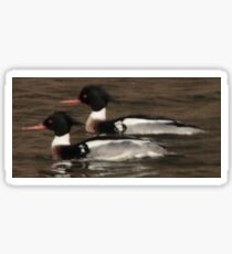 Red-Breasted Merganser's Sticker