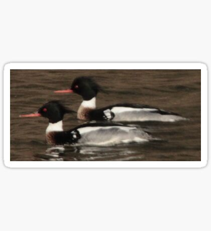 Red-Breasted Merganser's Sticker