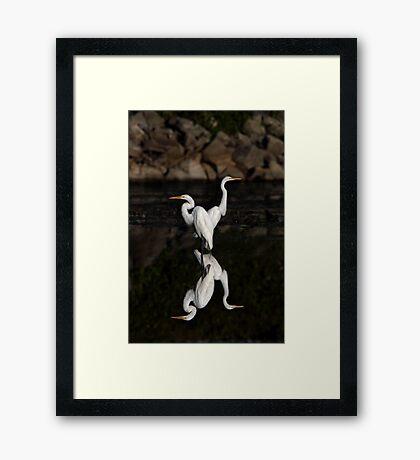 Reflective Moment - Great Egrets Framed Print