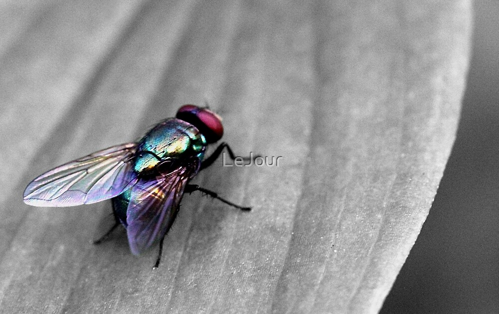 Fly by LeJour