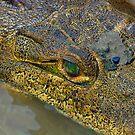 Crocodile. Palo Verde National Park, Guanacaste, Costa Rica by Eyal Nahmias
