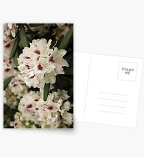 Nature's Own Bouquet For Your Wedding Day Postcards