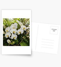 If Only Orchids Would Last Forever Postcards