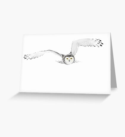 Eyes on the prize - Snowy Owl Greeting Card