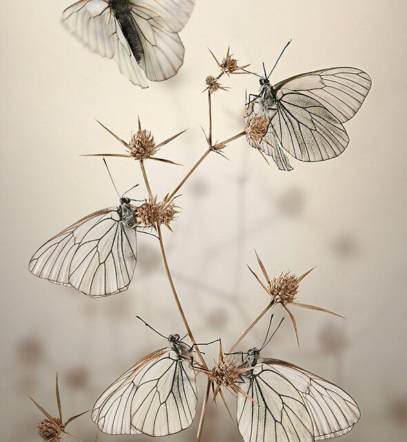 Goth wings by blepharopsis