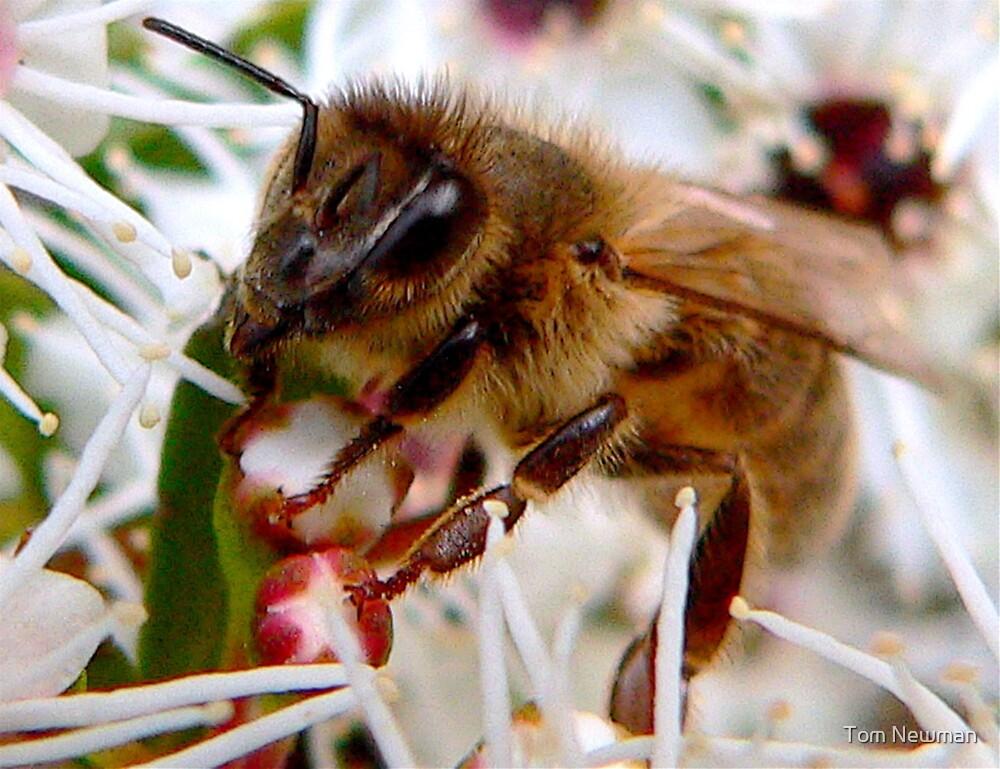 Bee II by Tom Newman