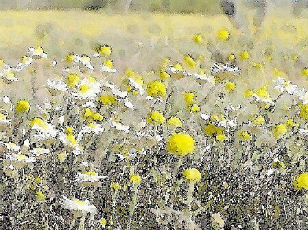 Bush Flowers by warneke