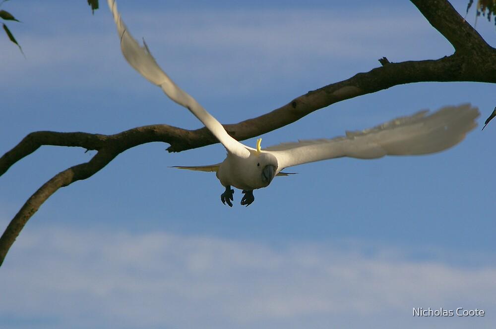 Take Flight by Nicholas Coote
