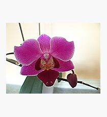 Orchid Picture Photographic Print