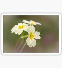 Woodland Primroses Sticker