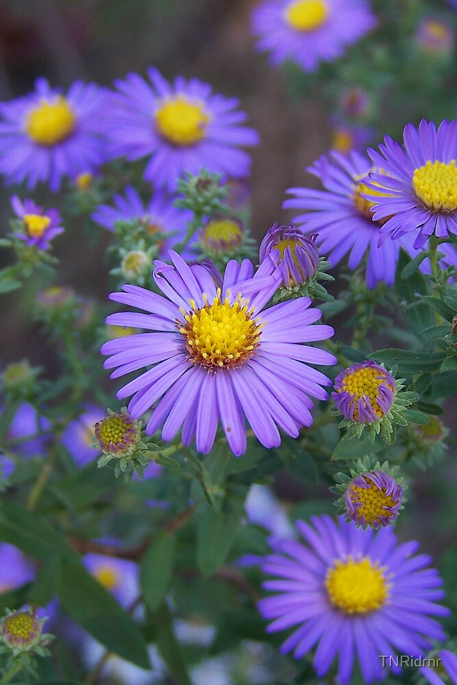 Wild Flowers by TNRidrnr