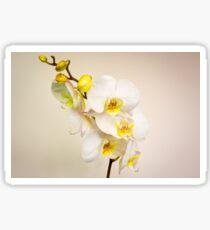 Phalaenopsis (moth orchid)  Sticker